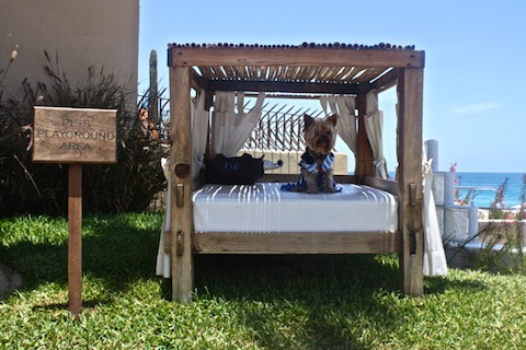 Dog Bed at Nikki Beach