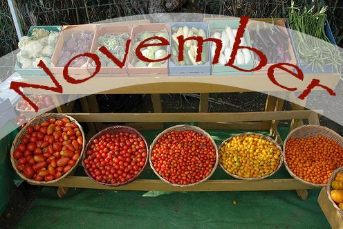 November in Cabo