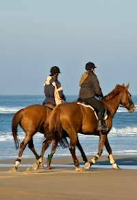 Cabo Horseback Riding