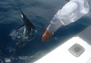 Catch and Release in Cabo