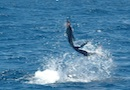 Jumping Sailfish in Los Cabos